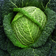 Savoy Cabbage Winter King appx 1500 seeds